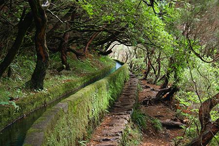 Levadas de Madeira Levada das 25 fontes