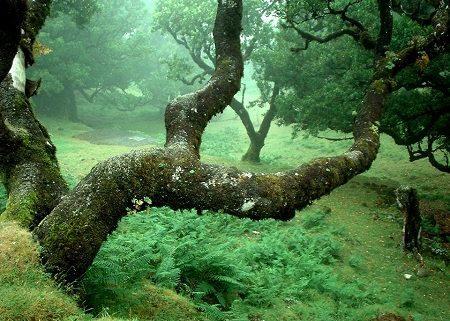 laurisilva-de-madeira